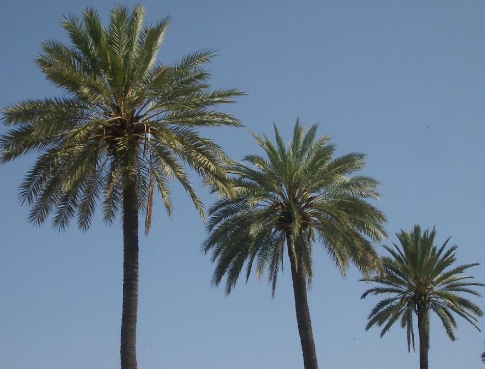 Best Palm Trees For Myrtle Beach Beach Landscaping