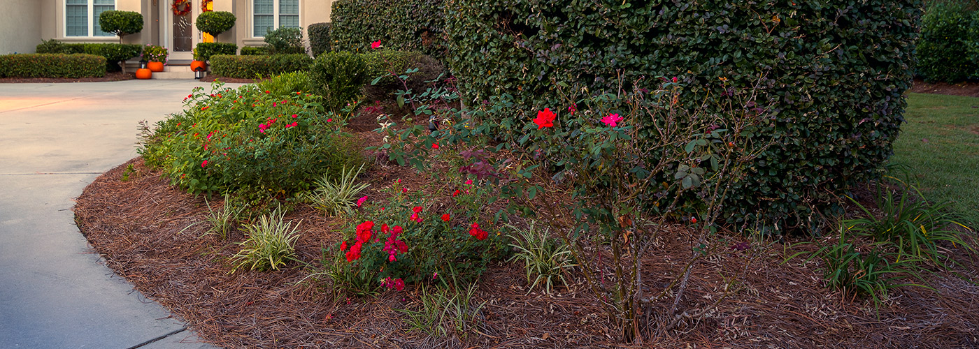 Residential landscaping lawn maintenance myrtle beach for Landscaping rocks myrtle beach