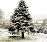[URL=http://media.photobucket.com/user/zacharyandzoa/media/christmas_tree_06.jpg.html][IMG]http://i414.photobucket.com/albums/pp226/zacharyandzoa/christmas_tree_06.jpg[/IMG][/URL]