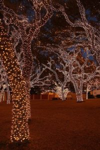 holiday lit trees